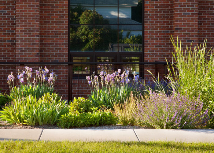 Perennial bed with native grass Basin Wildrye.