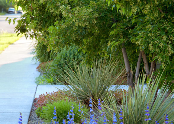Rocky mountain penstemon, and Yucca plant.