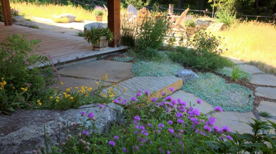 Photo of ground cover and native plantings