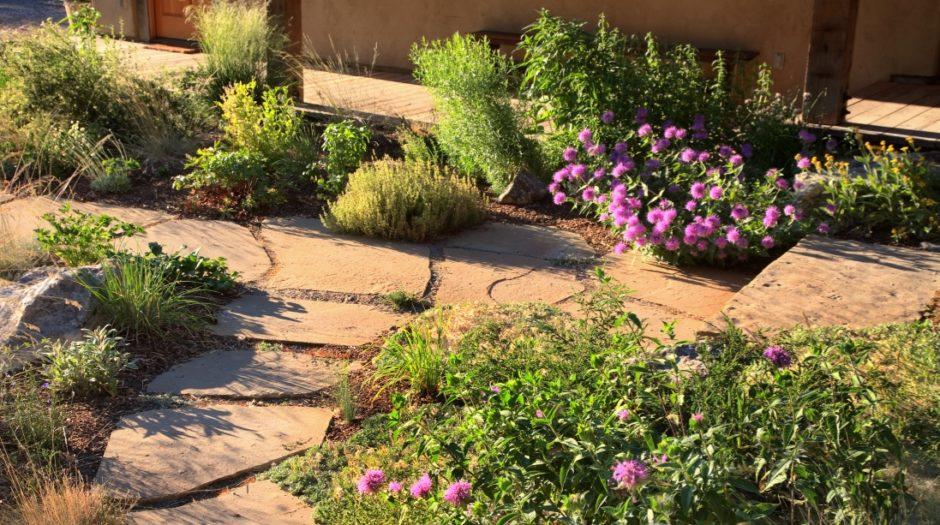 Detail photo showing flowering native plantins along rock walkways