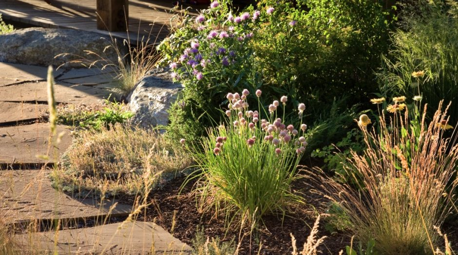 Photo of rock path with flowering native plantings